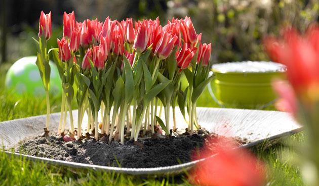 10 Lentetoppers in pot