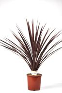 plant-Floralien