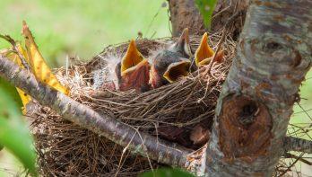 Vogels lokken naar je tuin