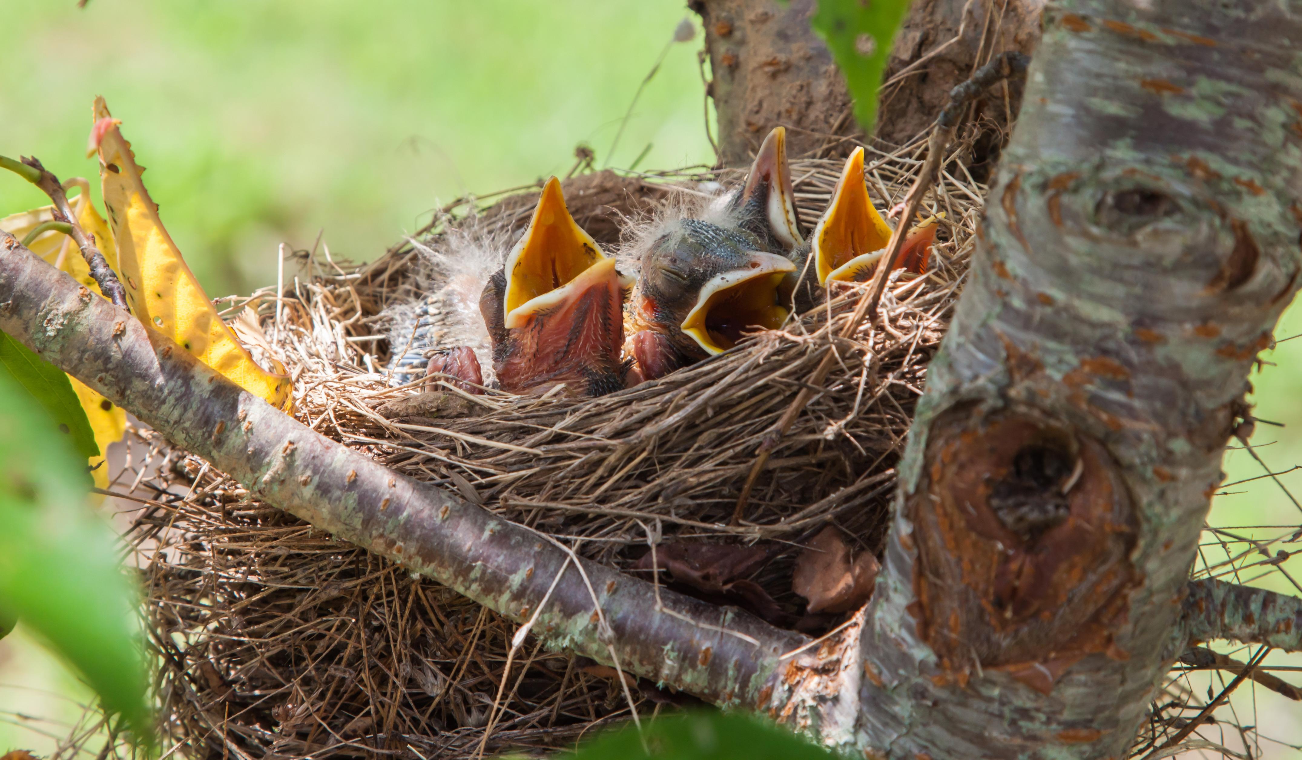 vogels lokken naar je tuin tuinseizoen. Black Bedroom Furniture Sets. Home Design Ideas