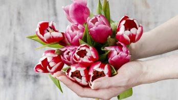 Snijbloemen mooi houden