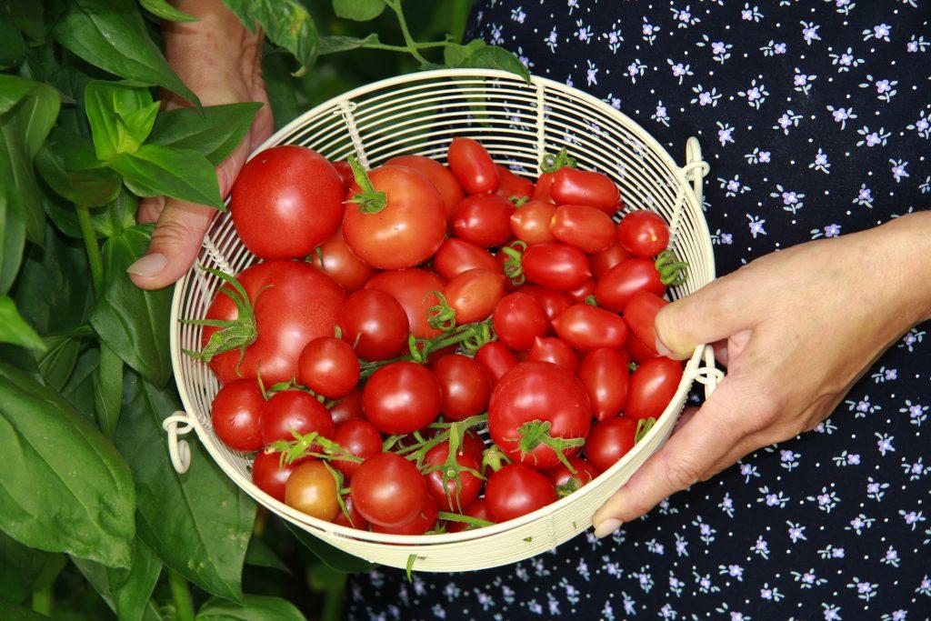 tomaten, tuinklusjes in mei, moestuin, tuinseizoen
