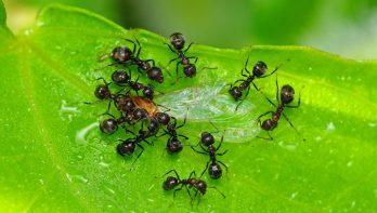 Tips om mieren te bestrijden
