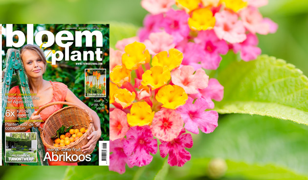 Bloem & Plant augustus 2014