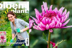 Bloem & Plant september & oktober 2014