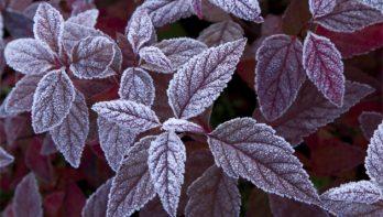 Bescherm vorstgevoelige planten