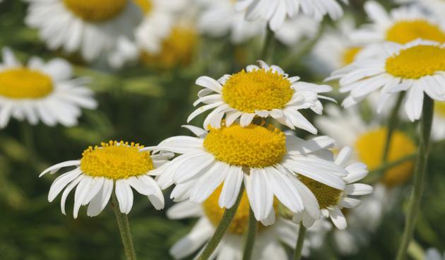 5x genezende planten en kruiden