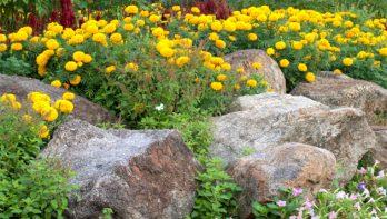 Tips voor rotstuinen en stapelmuurtjes
