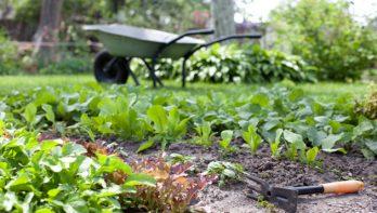 10 bespaartips voor tuinaanleg