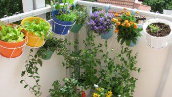 Vrolijk je balkon op met mooie balkonplanten