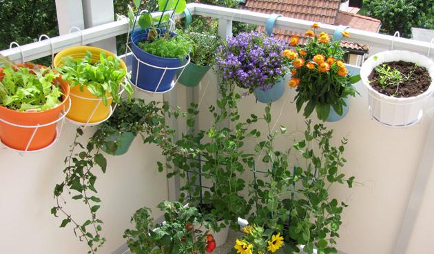 10 Mooie Balkons : Mooie balkonplanten voor dakterras en balkon