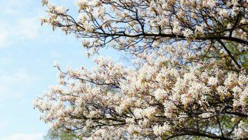 Het mooie krentenboompje