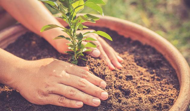 12 weetjes over potgrond