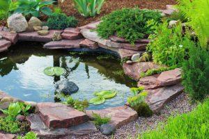 6 tips voor een heldere vijver tuinseizoen