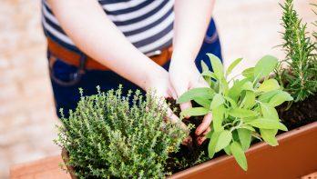 Verse kruiden uit eigen tuin