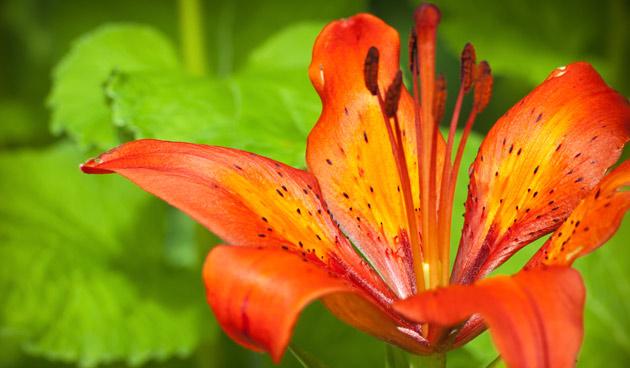oranje bloemen, tuinseizoen