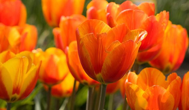 8 x oranje bloemen!