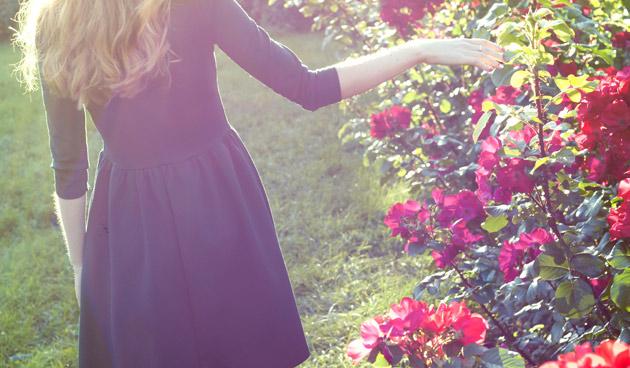 Onderhoud rozen