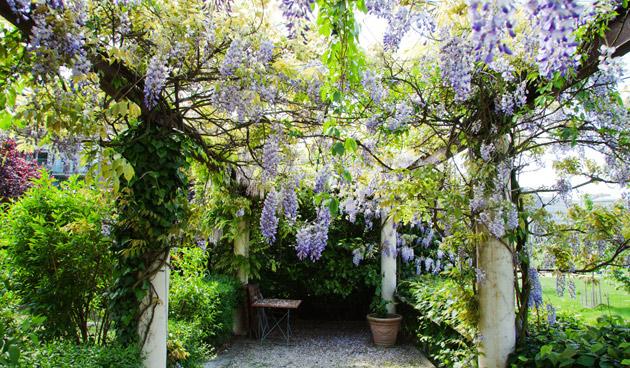 Tips voor een stralende tuin in mei