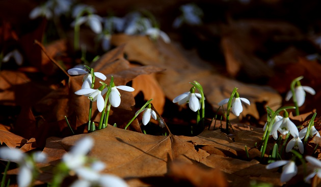 5 bescheiden herfstbloeiers