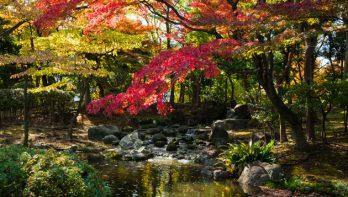 8 tips voor een vijver in de herfst en winter