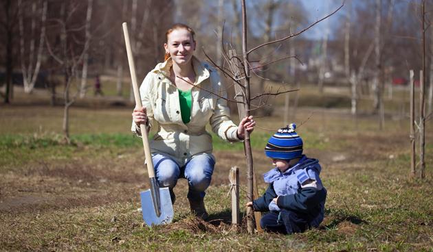 In 9 stappen bomen en struiken verplanten
