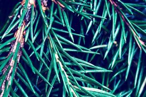 hergebruik je kerstboom