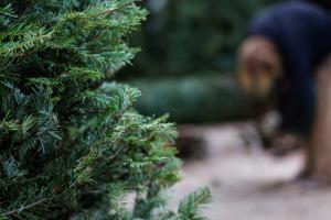 kerstboom in de tuin planten