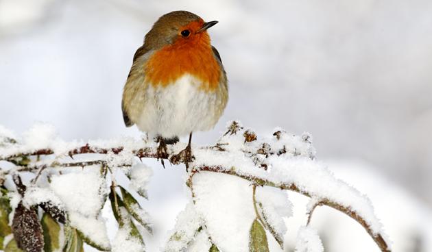 Winterklaar Maken Tuin : Tuin winterklaar maken nee hoor tuinseizoen