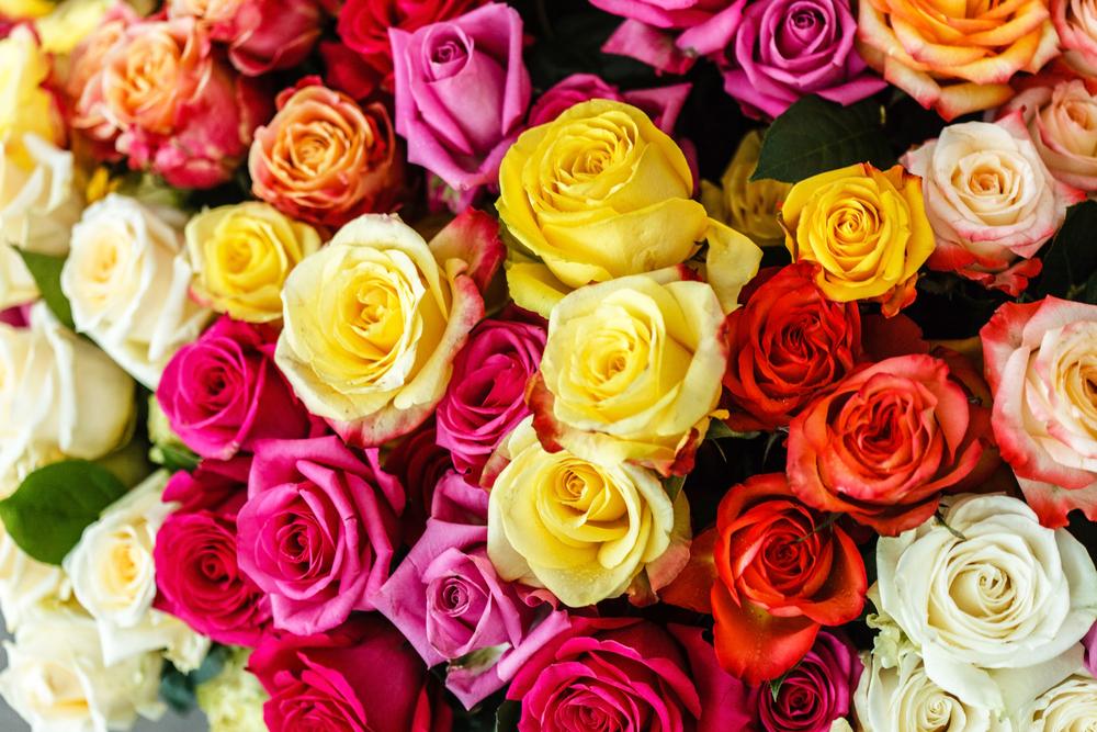 Rozen, gekleurde, kleuren, liefde, valentijnsdag