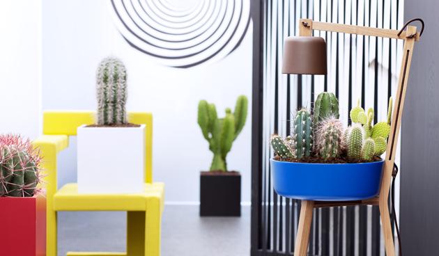 7 weetjes over de cactus