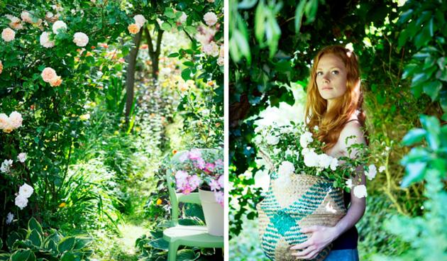 Roos: Tuinplant van de Maand juni