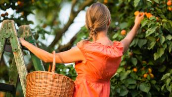 Abrikozen uit eigen tuin