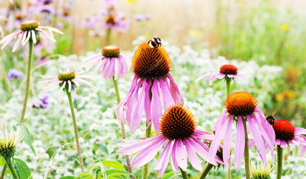 Mooie bijenplanten voor jouw tuin