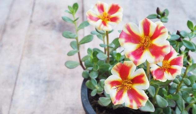 Gezonde planten in pot in de zomer