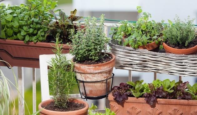 planten in pot shutterstock