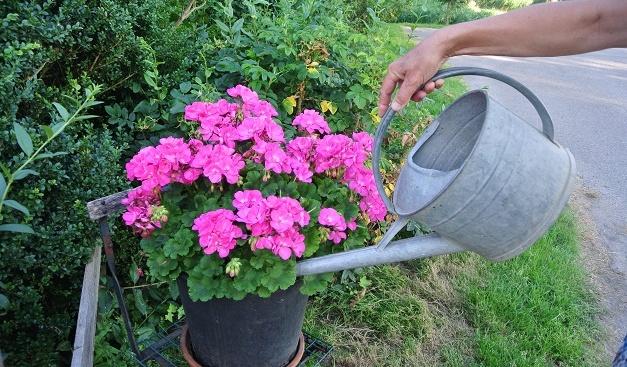 Potten Voor Planten.Gezonde Planten In Pot In De Zomer Tuinseizoen