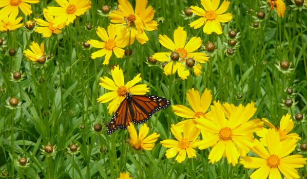 6 x gele zomerbloemen