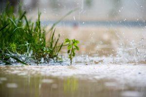 zelf compost maken: regen