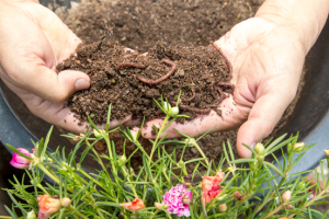 wormencompost