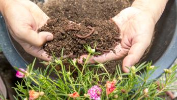 Wormencompost: wondermiddel voor de bodem