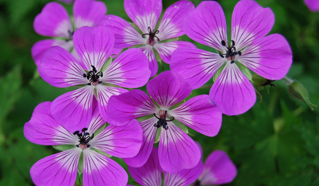 5 makkelijke vaste planten voor de nazomer