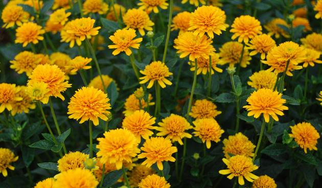 5 zonminnende vaste planten voor de nazomer
