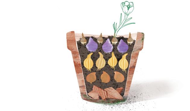 lasagnebeplanting