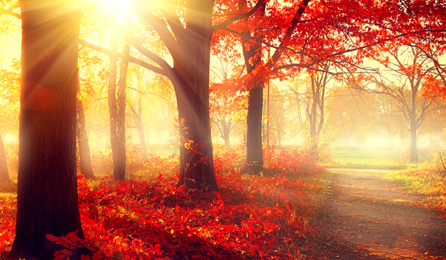 Herfstkleuren: overal anders