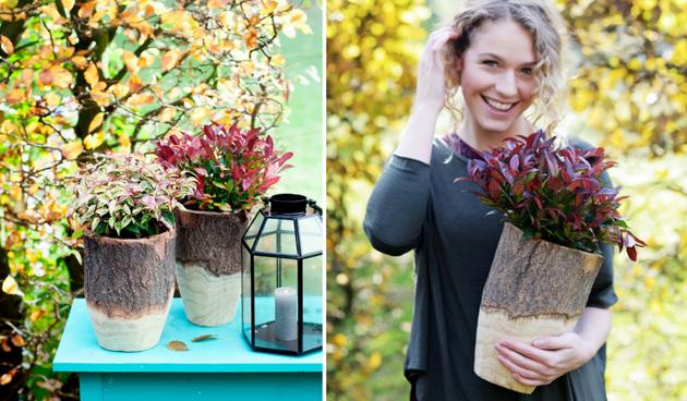 Leucothoe: tuinplant van de maand oktober