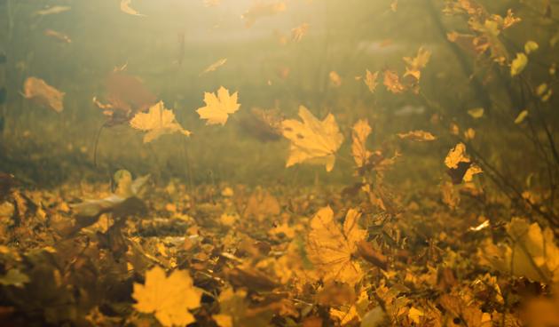 vallend blad in de herfst
