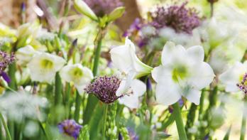 Bloembollen in klassieke tuin