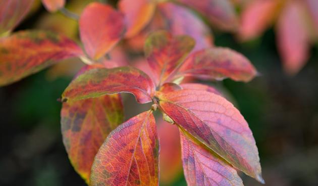4 Herfsttoppers voor kleur in de najaarstuin