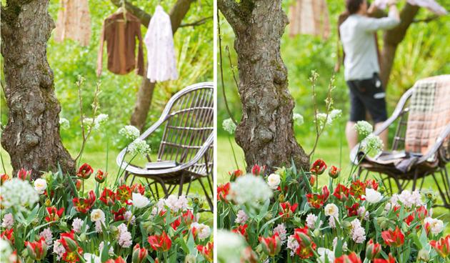 bloembollen in sfeervolle tuin